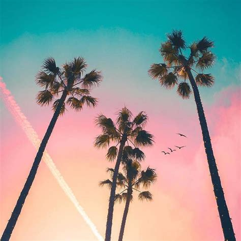 Konbini France On Sh In 2019 Palm Tree Pictures Pink
