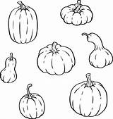 Gourds Outline Pumpkins Different Gourd Types Shapes Clip Vector Thanksgiving Isolated Sizes Illustrations Halloween Autumn Illustration Vectors Royalty sketch template