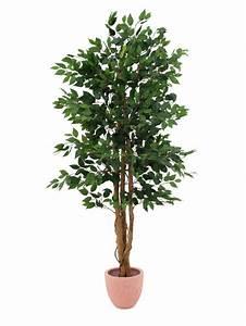 Ficus Benjamini Gelbe Blätter : ficus benjamini 1260 bl tter 210cm k nstliche pflanzen kunstpalmen zimmerbrunnen viele ~ Watch28wear.com Haus und Dekorationen