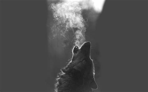 Alpha Wolf Blood Moon Wolf Wallpaper by Black Wolf Wallpaper 64 Images