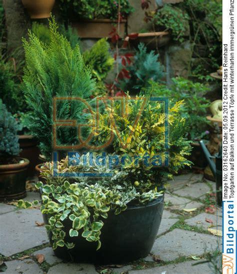 balkon pflanzen töpfe k 252 belpflanzen winterhart bilder k belpflanzen im fr hling brauchen k belpflanzen besondere