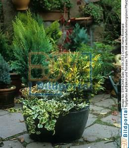Kübelpflanzen Winterhart Bilder : details zu 0003162640 topfgarten auf balkon und terrasse t pfe mit winterharten immergr nen ~ Markanthonyermac.com Haus und Dekorationen