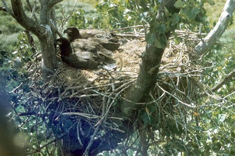 eagle eyrie rocky mountain national park u s national