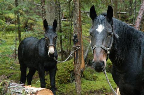 mule horse vs which epic battle riding