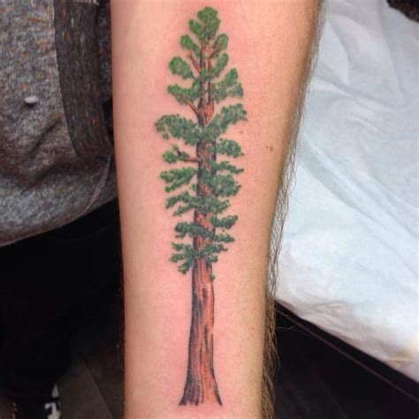 Images About Redwood Tree Tattoos Drawings