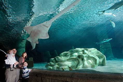 sea aquarium mall of america hours images frompo