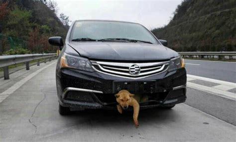hundetransport auto rückbank hunde im auto was beim transport zu beachten ist autozeitung de