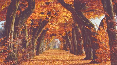 Aesthetic Autumn Wallpapers Desktop by 71 Fall Backgrounds 183 Free Cool Hd