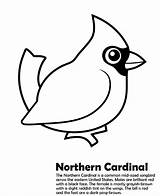 Cardinal Coloring Pages Northern Bird Printable Sheets Cardinals Template Templates Sheet Birds Super Stencil Stencils Animalstown Animals Christmas Cake Animal sketch template