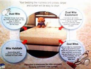 How to Get Rid of Dust Mites On Skin