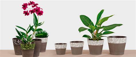 plante pot interieur