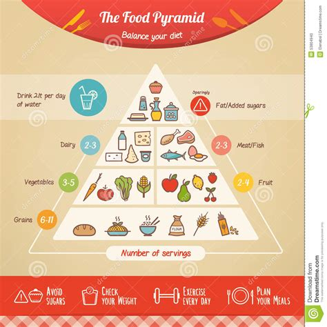 food pyramid stock vector image