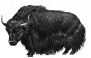 clipart yak