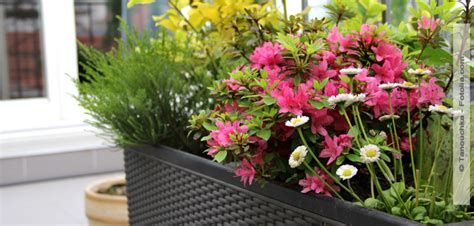 Gärtnern Auf Dem Balkon • Hallo Frau Das