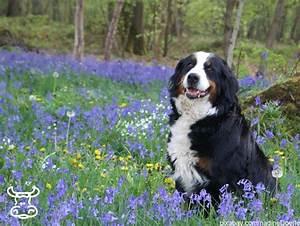 Passt Er Zu Mir Test : welche hund passt zu mir cool fr ihre info es gibt einen ~ Lizthompson.info Haus und Dekorationen