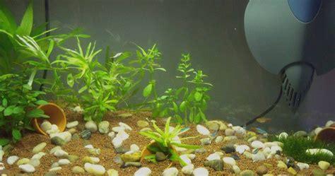 quel poisson choisir pour un petit aquarium quels poissons pour aquarium 28 images quels poissons pour un aquarium 60l 100l et 120l
