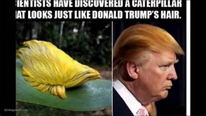 Memes Funny Funniest Trump Donald Hilarious Quotes