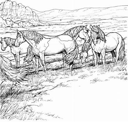Coloring Horses Pages Horse Printable Wild Herd