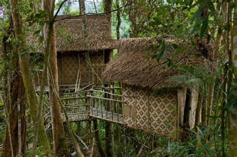 malaysia pokok tree treehouse di rumah hotel cameron terra paling farm atas hotels zen resorts escape weekend highlands thesmartlocal houses