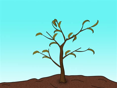 prune a peach tree step 12 jpg clipart best clipart best