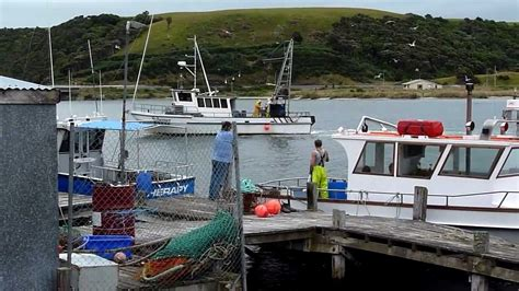 Fishing Boat Charters Dunedin by Fishing Boats Taieri Mouth Nz Youtube