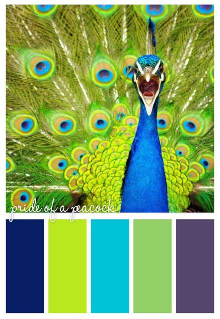 peacock colors peacock color scheme create a photoshop file with photo