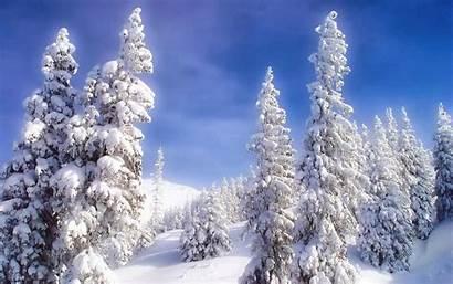 Winter Wallpapers Season Night Happy Trees Beats