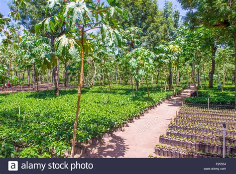 Roasted coffee, ground coffee, coffee for sale bulk supply green coffee arabica speciality coffee 0% defects direct we are a coffee plantation in guatemala called finca siete orejas (near to vulcano) our. Coffee plantation in Antigua Guatemala. Coffee is an important Stock Photo: 87394976 - Alamy