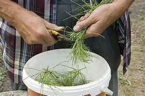 Purin De Sureau : 8 rem des naturels pour le jardin jardinage ~ Melissatoandfro.com Idées de Décoration