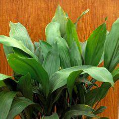 House Plants on Pinterest | Houseplant, Easy House Plants ...