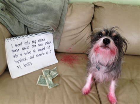 14 Of The Funniest Dog Shaming Photos Ever! Hilarious