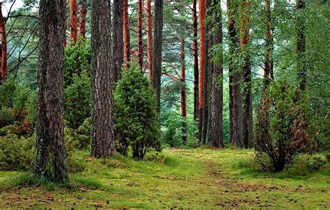 Pētnieks nosauc meža nozares nākotnes izaicinājumus - AgrozemesAgrozemes