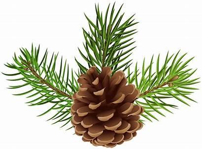 Pine Cone Clip Clipart Pinecone Cones Transparent
