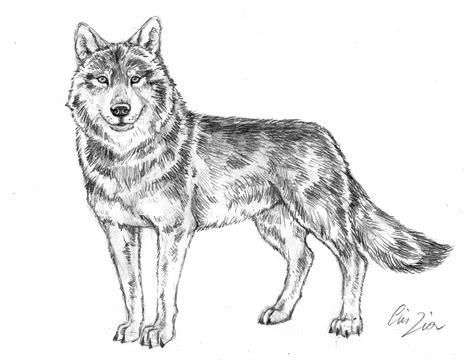 lupo disegno facile per bambini disegno disegno libero