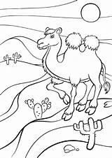 Camel Coloring Pages Animals из все категории раскраски sketch template