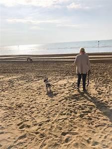 Urlaub Mit Hund Am Meer Italien : mit hund am strand von lignano italien urlaub mit hund ~ Kayakingforconservation.com Haus und Dekorationen