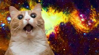best cats for 15 best cat memes