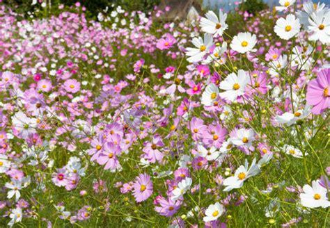 Blumen Gekonnt Arrangieren
