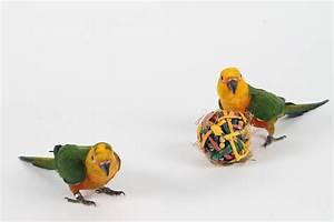 Foraging Toys for Birds - Hari