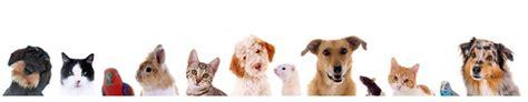 gartenpflege mietvertrag klausel haustiere hamster ja hund oder katze immer noch bedingt