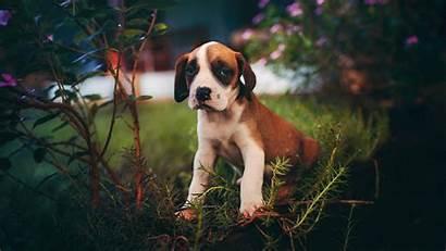 Puppy Dog 1080p Sits 4k Uhd Hdtv