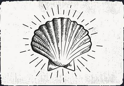 Drawn Shell Hand Background Vector Fish Gold