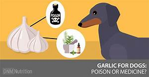 garlic for dogs poison or medicine