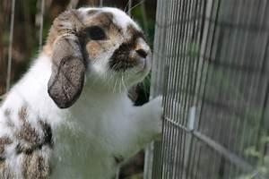 Was Kann Ich Gegen Mäuse Tun : tierversuche was kann ich dagegen tun ~ Indierocktalk.com Haus und Dekorationen