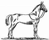 Horse Coloring Pages Printable Appaloosa Standardbred Horses Drawing Print Dressage Getdrawings Getcolorings Blonde Clipartmag Buzz sketch template