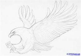 How to Sketch an Eagle In Pencil  Draw an Eagle Bird  Step by Step      Simple Drawing In Pencil