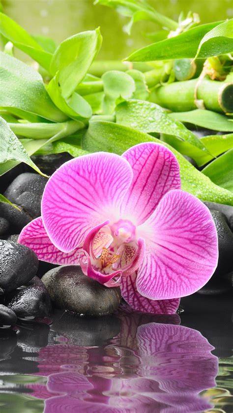 purple orchid iphone wallpaper hd