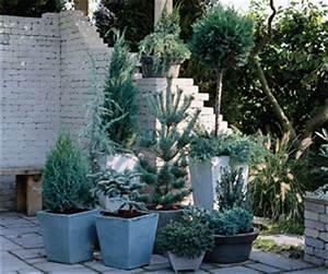 Arbres Fruitiers Nains En Pleine Terre : cultiver un arbre en pot gamm vert ~ Premium-room.com Idées de Décoration