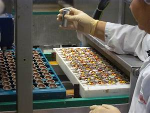 Inside a candy & chocholate factory