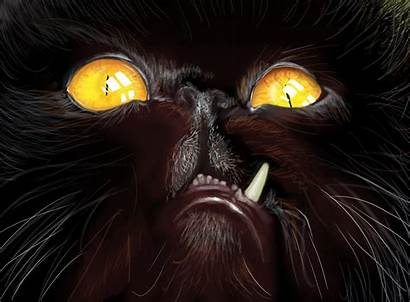 Ugly Cats Wallpapers Cat